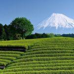 静岡県の茶産業首位転落に思う